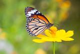 Butterflies and Flowers - Fine Art prints