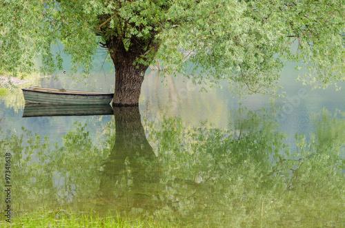 Alberi nel lago e riflessi
