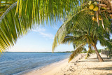 Fototapety Beach palms and turquoise sea at