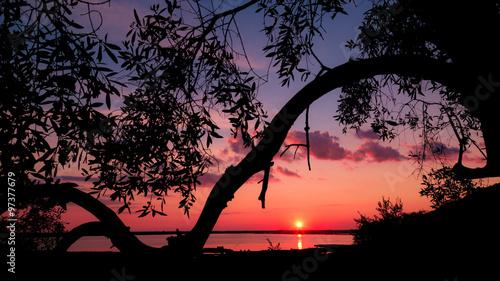 Tramonto Rosso sul Lago oltre un albero