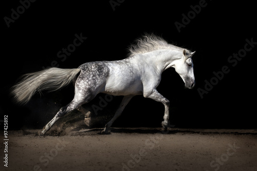 Poster White horse with long mane in desert dust trotting