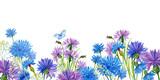 голубые,синие,фиолетовые цветы и трава на белом фоне