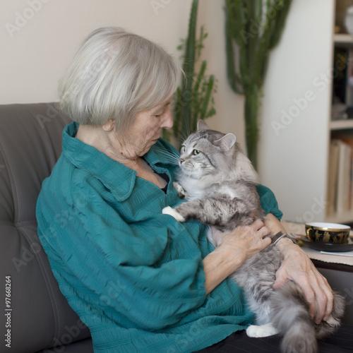 Elderly cats behavior