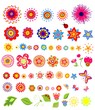 Set of colorful summer flowers