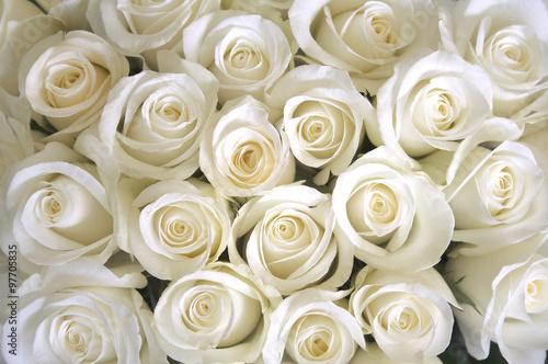 Fototapeta White roses background
