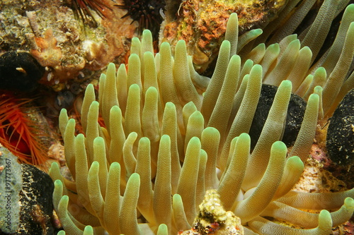 Plakat Underwater creature tentacles of sea anemone
