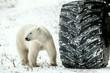 Little bear or big wheel?