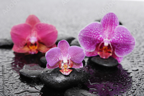 Three orchid and stones on wet background