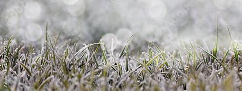 Frost auf der Wiese - 97827434