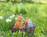 Fototapety red rabbits outdoor