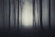 minimal forest with fog