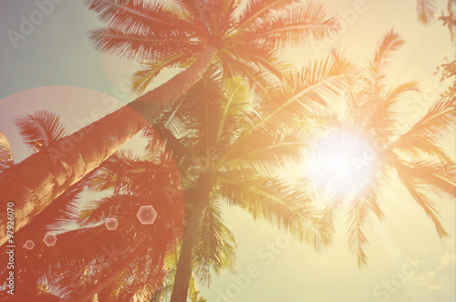 mata magnetyczna Blur tropical palm tree with sun light abstract background.
