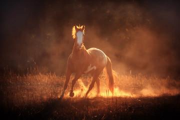 Koń w słoneczych promieniach