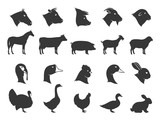Farm Animals Silhouettes and Icons - 97996255