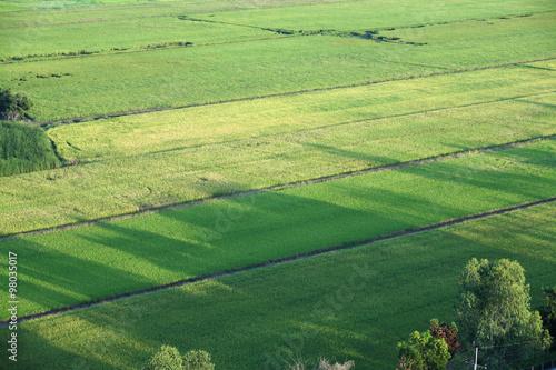 Keuken foto achterwand Olijf paddy field from top view