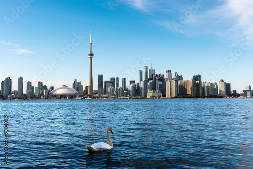 Fotobehang Toronto White swan and Toronto skyline