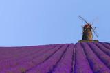 Lavendelfeld mit einer Mühle, Südfrankreich