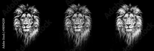 Poster Portrait of a Beautiful lion, lion in the dark, oil paints