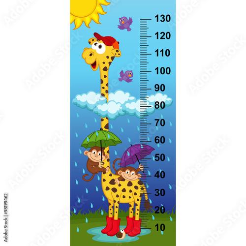 Fototapeta giraffe height measure(in original proportions 1:4) - vector illustration, eps