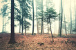 Beautiful dreamy foggy forest trees landscape. Color filter effect used.