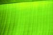 of a  green  black   kho samui