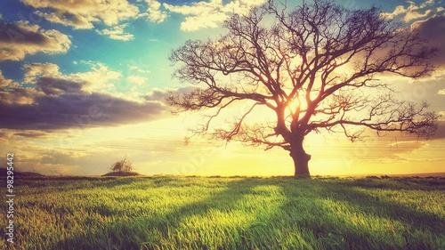 Wiosna zmierzch, osamotniony drzewo w polu