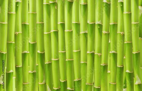 Obraz beautiful green bamboo background