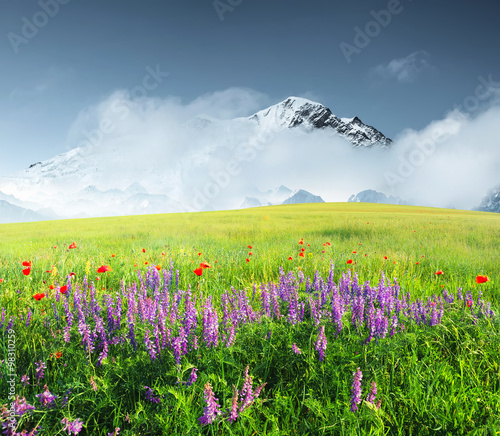 Fototapeta Field with flowers in mountain valley. Natural summer landscape.