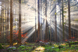 Magical sun rays in forest landscape. Lovely autumn colors in dreamy forest. - 98352860