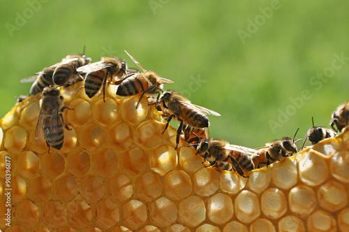 Fotobehang Bee api su favo
