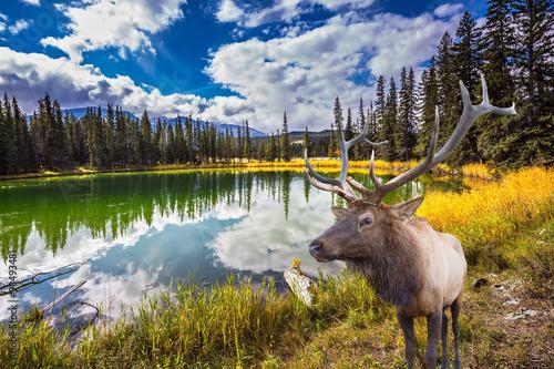 Proud deer antlered and round lake © Kushnirov Avraham