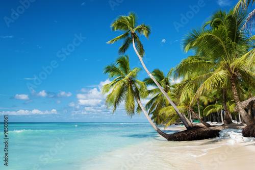 mata magnetyczna Caribbean beach in Saona island, Dominican Republic