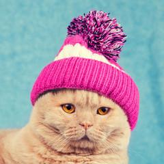Portret kota sobie czapka z dzianiny z pompon