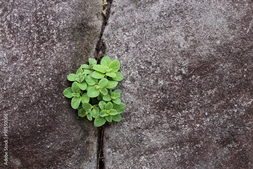 Poster Plant grow up on cracked stone.