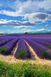 Lavender field, France