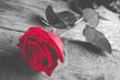 Obrazy na płótnie, fototapety, zdjęcia, fotoobrazy drukowane : red rose on wood - black and white style photo with single flower colored
