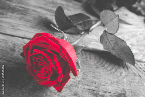 red rose on wood - black and white style photo with single flower colored