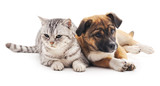 Cat and puppy. - 98576810