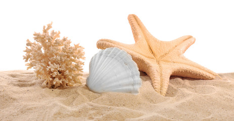 Sea star, coral and sea shell on sand isolated on white background