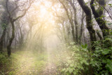 Foggy forest with sun rays in Tarifa, Cadiz, Spain. Morning Sun