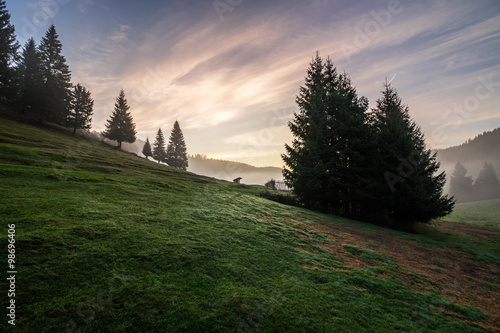 fir trees on  hillside meadow in fog before sunrise