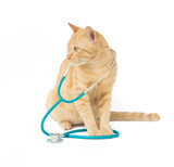 cat with a stethoscope