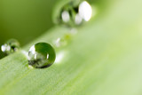 Water drops on the fresh green shoot. Super Macro