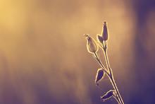 Wiosna / lato kwiaty