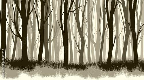 Horizontal illustration with many trunks tree. - 98902827