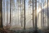 Promienie słoneczne przebijają mgłę
