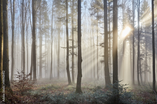 obraz lub plakat Sun rays through the foggy forrest