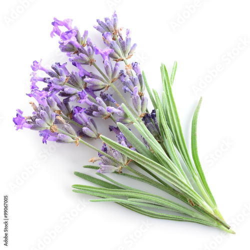 Lavender isolated - 99067005