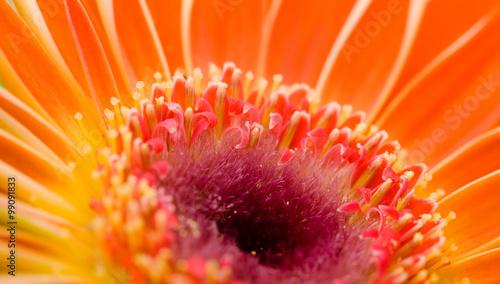obraz lub plakat Flower macro shot