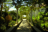 Beautiful pergola passage in the summer garden